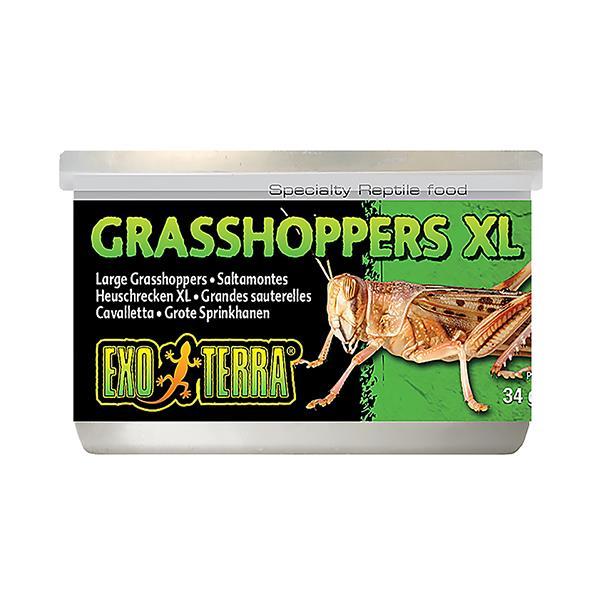 Exo Terra Wild Grasshoppers Each