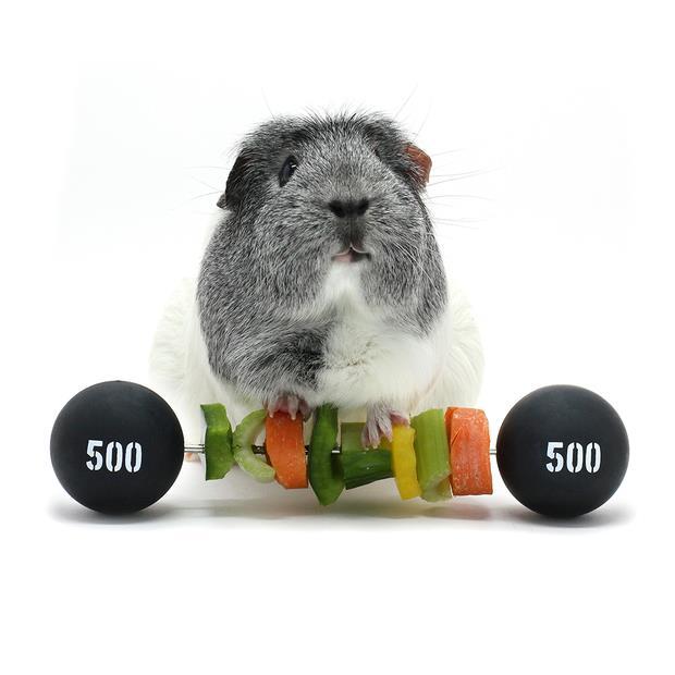 Haypigs Piggy Weight Lifter Vegetable Kebab Maker Each