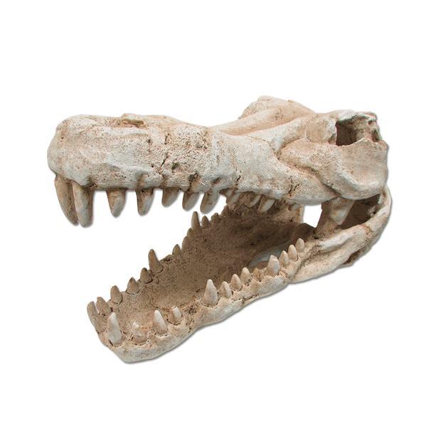 Ipetz Croc Skull Medium