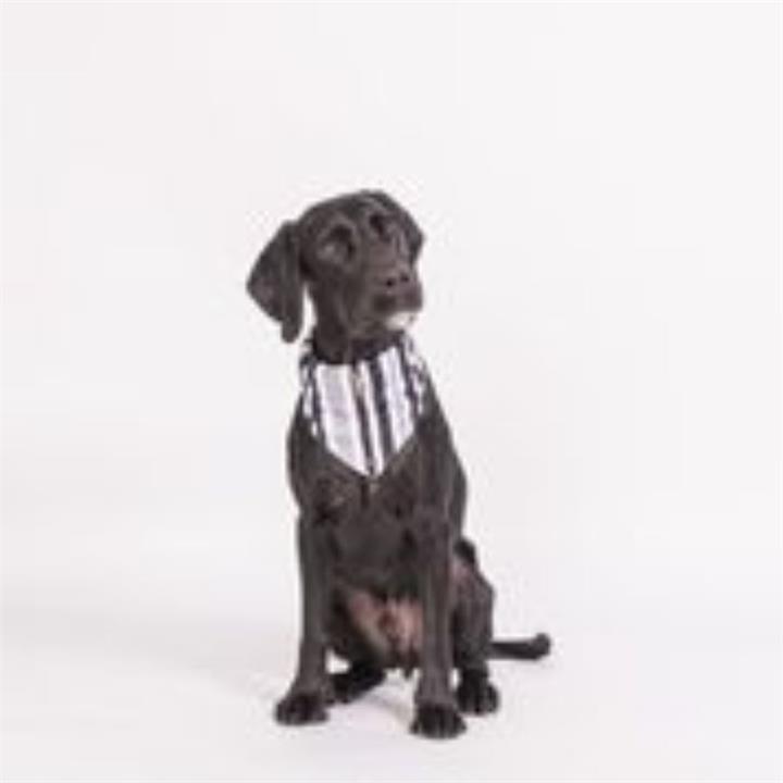Mog & Bone Dog Bandana Pebble Black Brush Medium