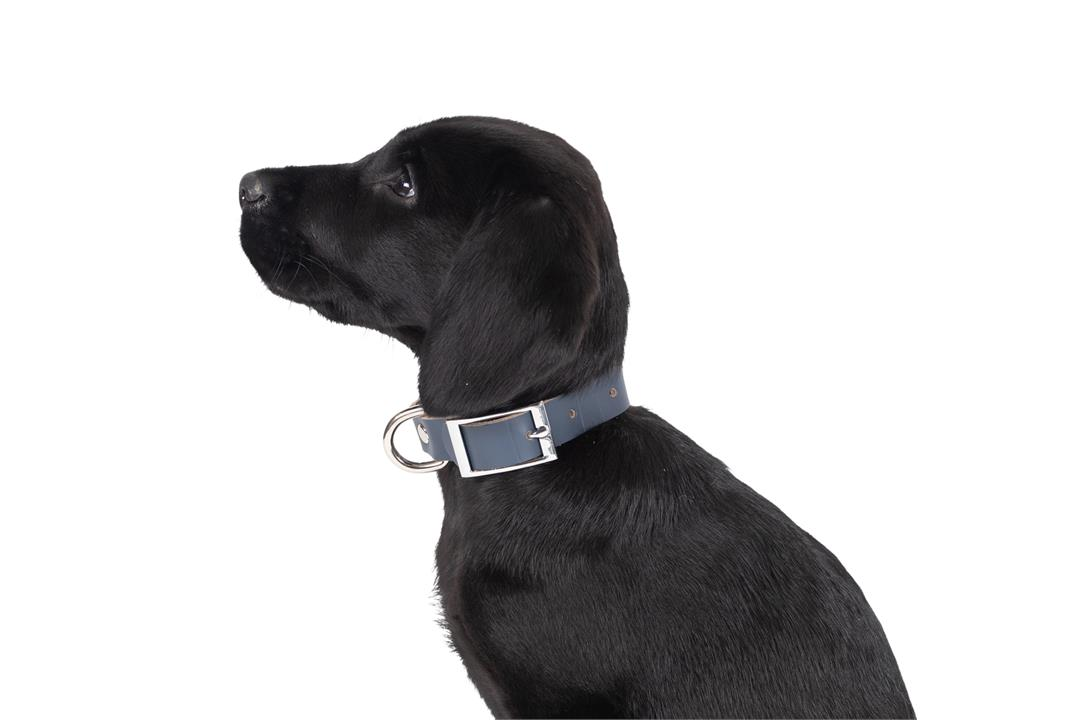 Mog & Bone Genuine Leather Dog Collar Navy Extra Small