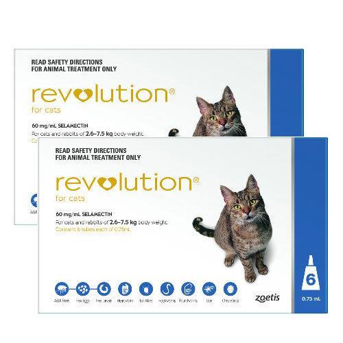 Revolution Blue 12 pack