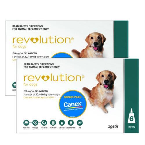 Revolution Teal Large 20-40kg 12 pack