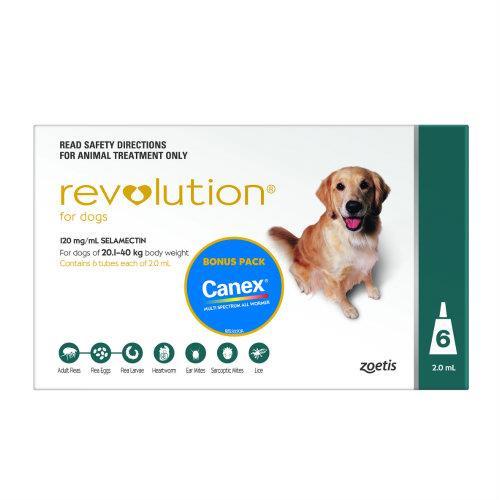 Revolution Teal Large 20-40kg 6 pack