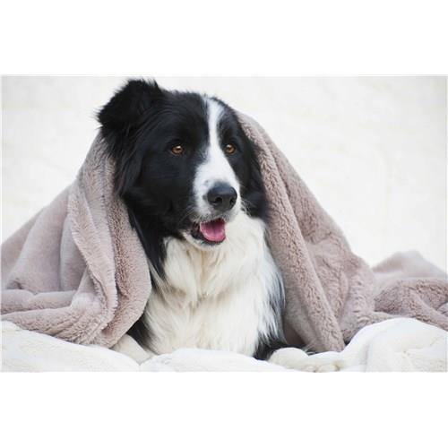 T & S Puppy Mink Blanket Mushroom